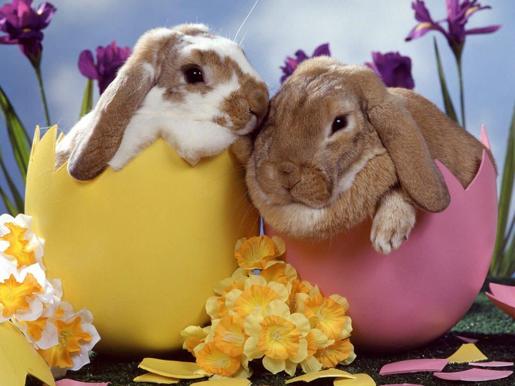 Vă doresc un Paşte fericit!