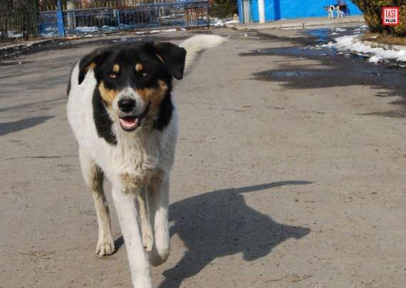 Despre copilul omorât de câini vagabonzi în București