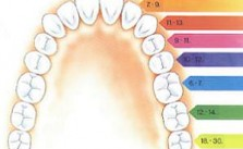 Febra copii dinti