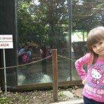 Sara la Zoo Braila Romania 17