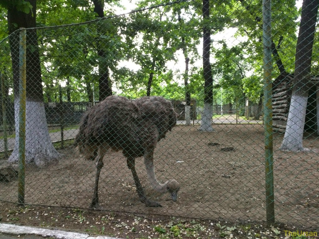 Sara la Zoo Braila Romania 25