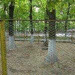 Sara la Zoo Braila Romania 28