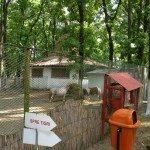 Sara la Zoo Braila Romania 5