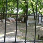 Sara la Zoo Braila Romania 9