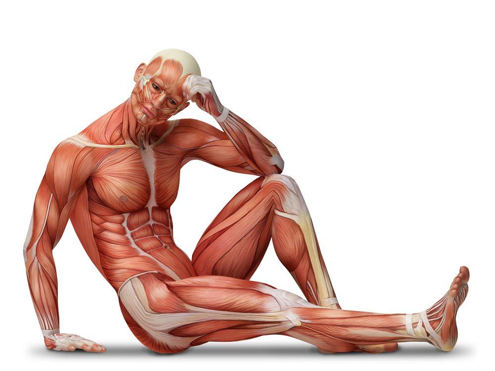 O chestie scurtă despre mușchi(i mei)
