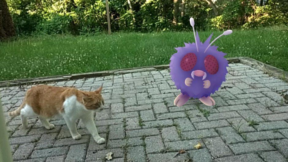 Pokemon langa pisica