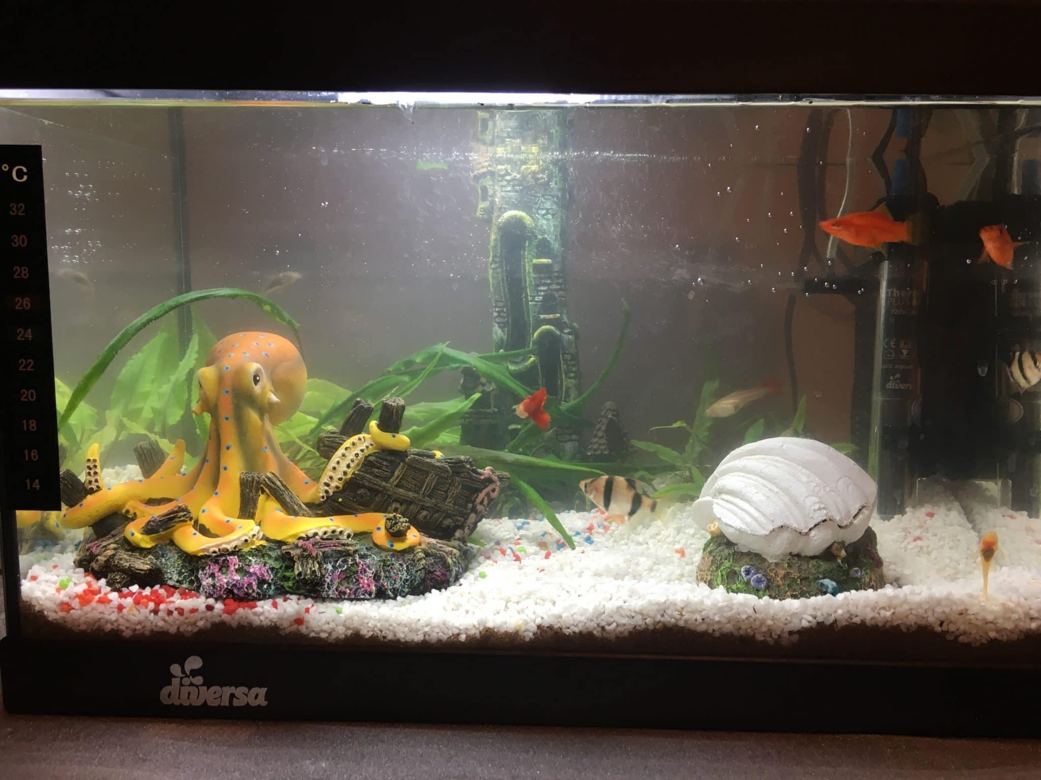 Upgrade acvariu Ursan